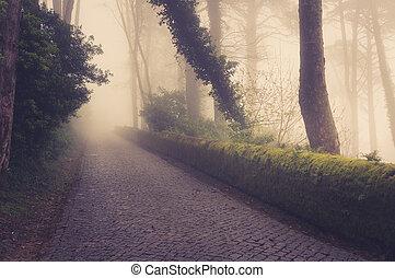 Straße durch einen goldenen Wald mit Nebel und warmem Licht.