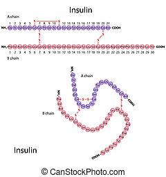 struktur, insulin, menschliche , eps8