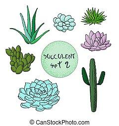 Sukkulent Kaktus-Sammlung. Agave, carnegiea, aloe, gastraea, haworthia, saguaro, echinopsis, san pedro, cereus