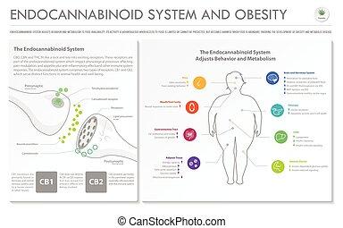 system, geschaeftswelt, infographic, fettleibigkeit, horizontal, endocannabinoid, vollständig