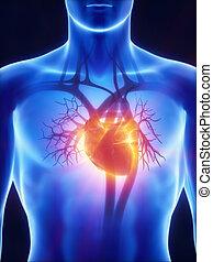 system, röntgenaufnahme, kardiovaskulär