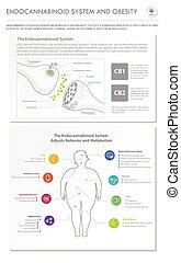 system, senkrecht, geschaeftswelt, infographic, fettleibigkeit, endocannabinoid