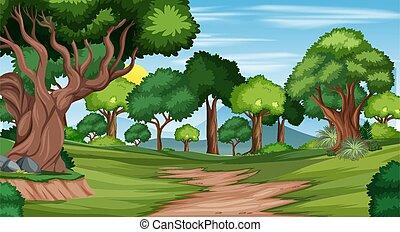szene, spur, wald, landschaftsbild