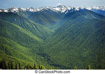 täler, linie, nordwesten, washington, berge, pazifik, schnee, olympisch, hurricaine, bergrücken, grüner staat, national, nadelbäume, park