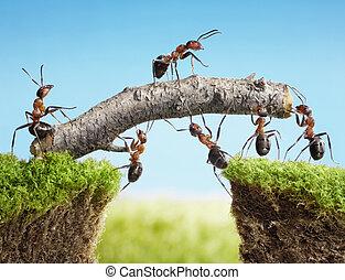 Team der Ameisen baut Brücke, Teamwork