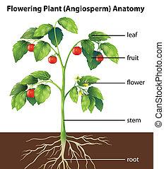 Teile einer Pflanze.