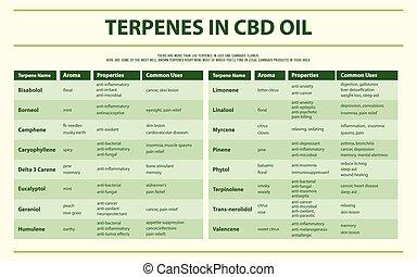 Terpenes in CBD Öl horizontal infographic.