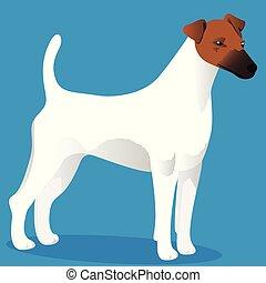 terrier, fuchs, glatt, hund