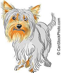 terrier, vektor, yorkshire, hund, pedigreed