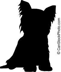 terrier, yorkshire, silhouette, sitzen