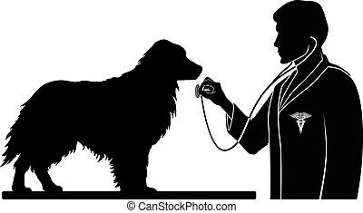 tierärztliche , hund