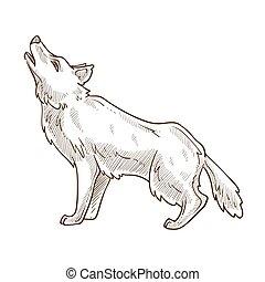 tier, freigestellt, heulen, wolf, wild, skizze, mond