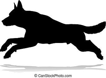 tier, haustier, silhouette, hund