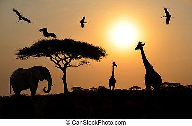 Tiere über Sonnenuntergang auf Safari in der afrikanischen Savanne