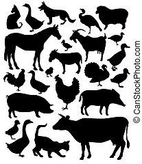 Tiere auf der Farm