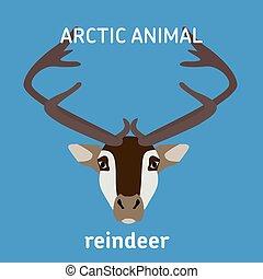 Tiere des Arktischen. Der Kopf Rentiere.