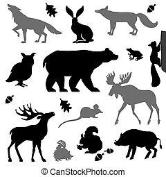 Tiere leben im europäischen Wald.