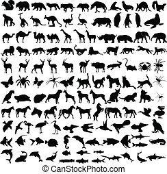 Tiere sammeln sich