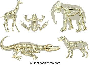 tiere, skelette