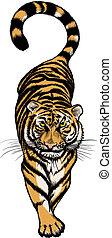 tiger, abbildung, kauern