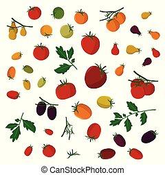Tomaten veranschaulichen.