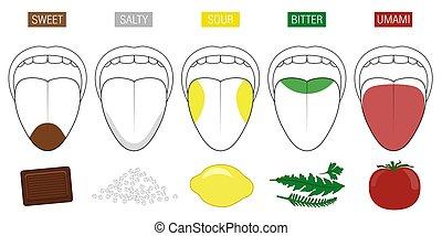 Tongue-Geschmack-Bereiche Lebensmittel Illustration