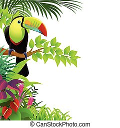 Toucan Vogel im tropischen Wald