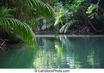 Tranquil See mit üppiger tropischer Vegetation.