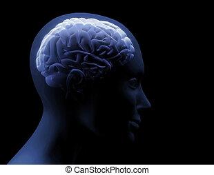 Transparentes Gehirn