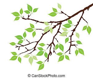 Tree Ast.