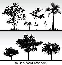 Tree Gras Silhouette