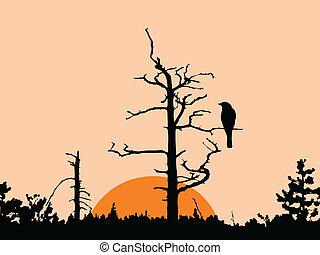 trocken, baum, vektor, silhouette, vogel