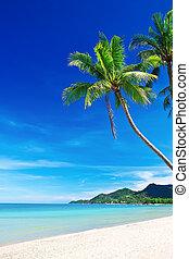 Tropischer weißer Sandstrand mit Palmen