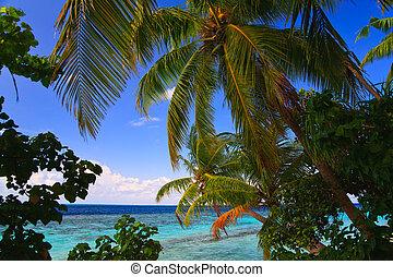 Tropisches Paradies auf Malediven