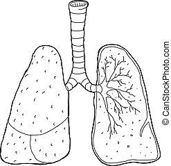 umrissen, kreuz, lungen, abschnitt
