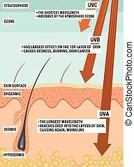 UV-Strahlung und ihre Wirkung auf die menschliche Haut.