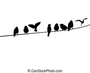 Vögel auf einem Telefonkabel.