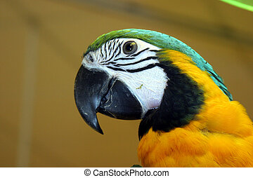 Vögel Nr. 1