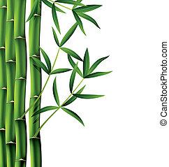 Vector Bambuszweige.