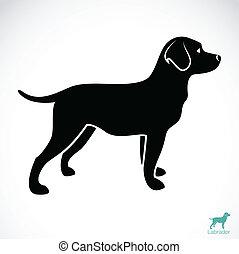 Vector-Bild eines Hundelabradors