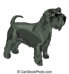 Vector Black Miniatur-Schnauzer-Hund