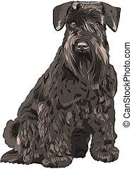 Vector Black Miniature Schnauzer-Hund sitzt