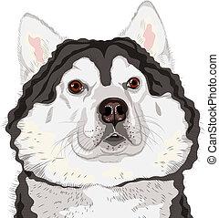 Vector Closeup Portrait eines Hundes Alaskan Malamute