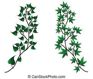 Vector - dekorative Zweigsilhouette und grüne Blätter, weißer Hintergrund.