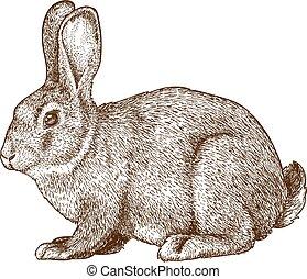 Vector graviert Kaninchen.