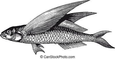 Vector High-Detail fliegende Fischgravur.