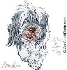 Vector Hund züchte Lowchen.