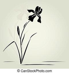 Vector Iris-Blume.