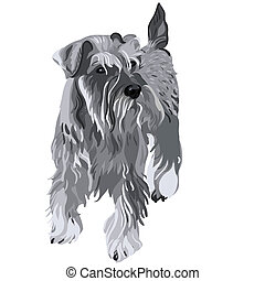 Vector Miniatur-Schnauzer-Hund