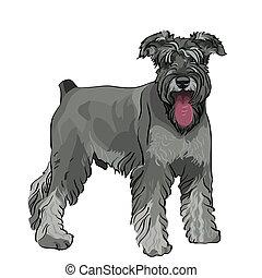 Vector Miniature Schnauzer-Hund mit heraushängender Zunge